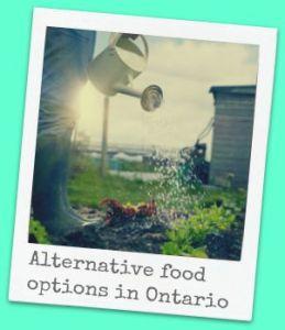 alternative food options